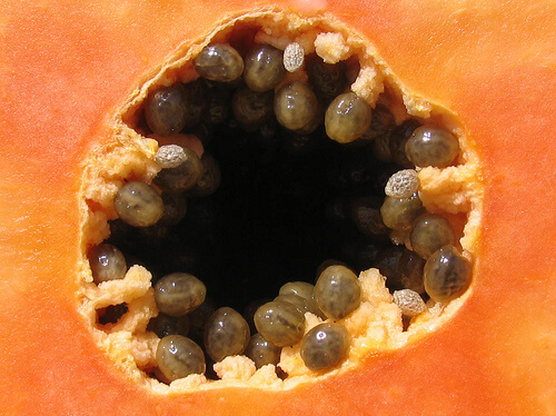 Seeds of the papaya fruit