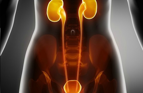 Caring for Your Bladder and Kidneys