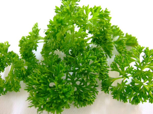 Parsley fresh