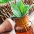 powerful medicinal herbs