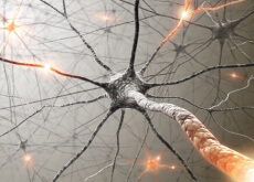 Brain Impulses