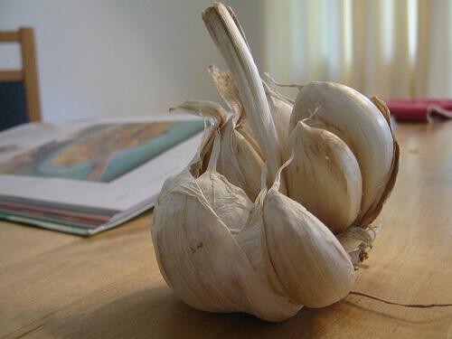 garlic-9-1