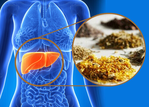 Cleanse Your Liver With Medicinal Herbs