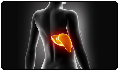 Cleanse Your Liver to Lose Weight