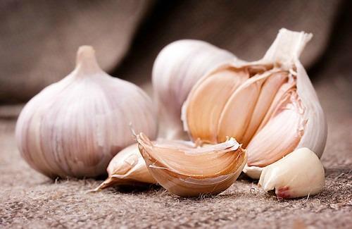 Preparing Garlic for Medicinal Purposes