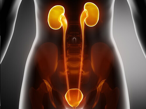 The Symptoms of Kidney Disease