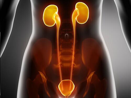 The Symptoms of Kidney Disease