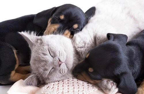 Why Are Pets Good for Our Health?
