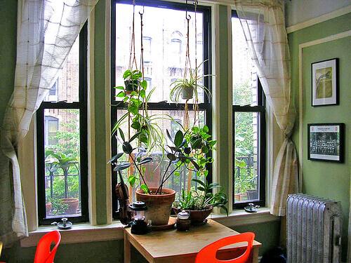2-plants-7