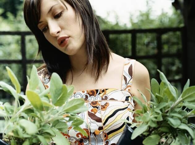 Salvia_Plant