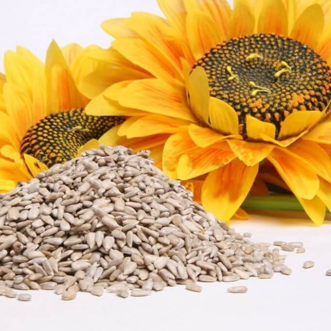 sunflower-seeds-0
