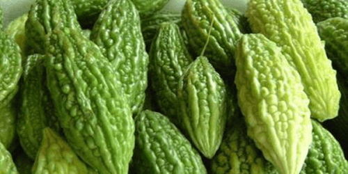 Bitter Gourd: Research Shows This Plant Can Cure Cancer and Diabetes