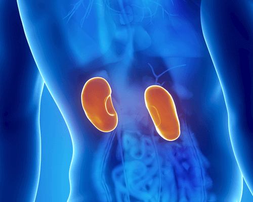 The Symptoms and Treatment of Kidney Infections