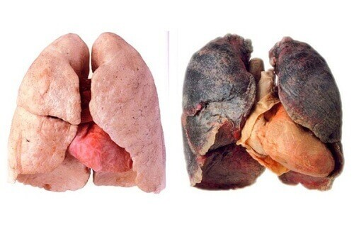 Tips for Cleaner Lungs