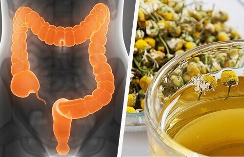 Colon Cleansing Medicinal Herbs